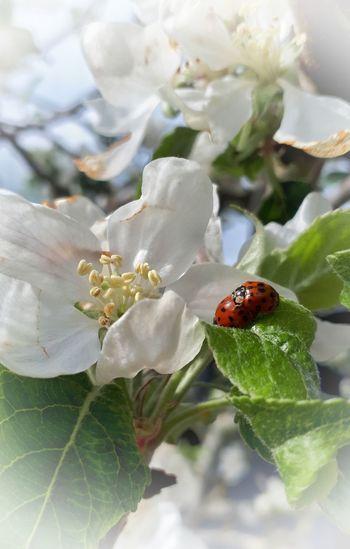 🍃'Ladybirds