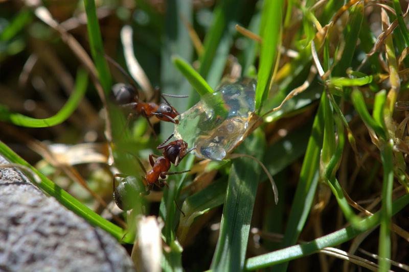 Ants Animal