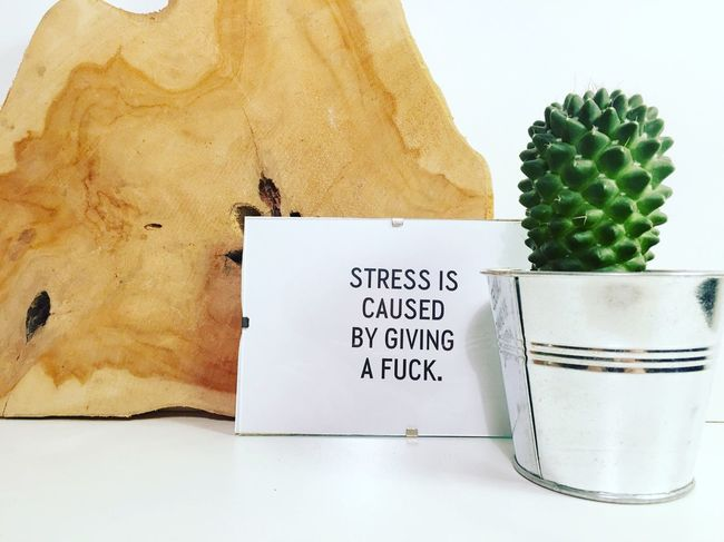 Stress is caused by giving a fuck. Candlelight Candle Skull Photography Art ArtWork Drawing Landscape Spring Winter Beautiful Design Livingroom Decoration Home Product Photography Interior House Cactus Cactusporn
