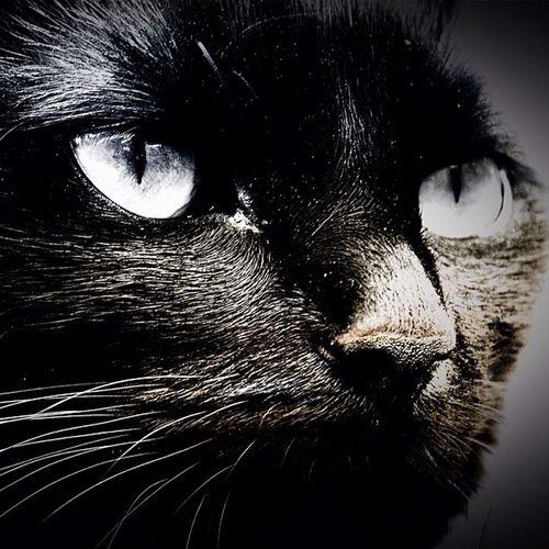Lucky Crazycatgirl Crazycatlady Cat Cats BLackCat Blackcats Photo365 Photooftheday K8marieuk Furry Fuzzball  Niko Puddytats
