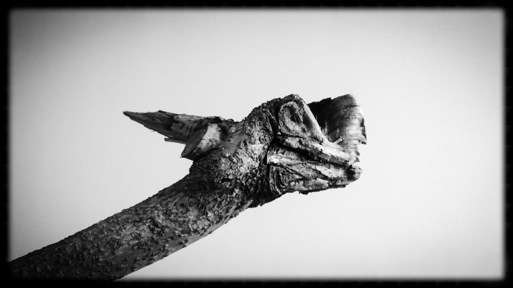 Just found this in front of my house after a storm. Just love to look at it and see dragons in it 😁 Sculpture Stick Branch Dragon Black White Black And White Close-up