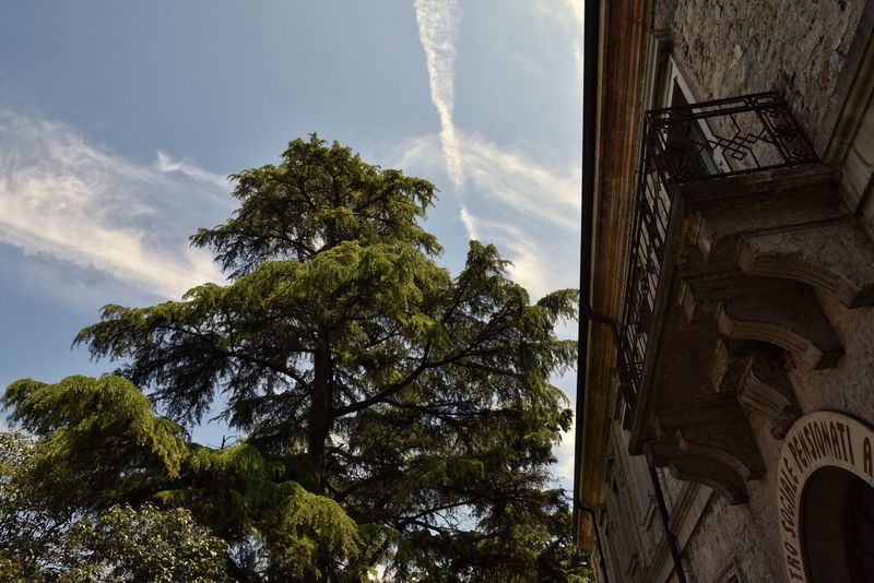 Peschiera del Garda Tree Low Angle View Sky Architecture No People History Day Outdoors Nature PeschieraDelGarda The Architect - 2017 EyeEm Awards The Great Outdoors - 2017 EyeEm Awards Landscape Nikon Enjoying The View Nikon D750 Tranquility Lago Di Garda Italy TreePorn Light And Shadow Detail Rural Scene Old Buildings Full Frame