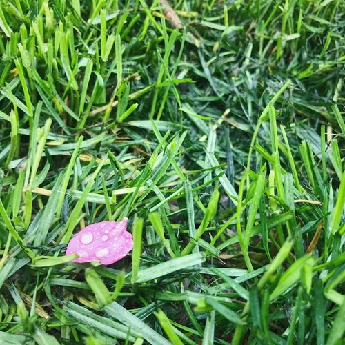 Growth Nature Green Color Flower Beauty In Nature Freshness Fragility Plant Outdoors Grass No People Flower Head Leaf Close-up Day Backgrounds