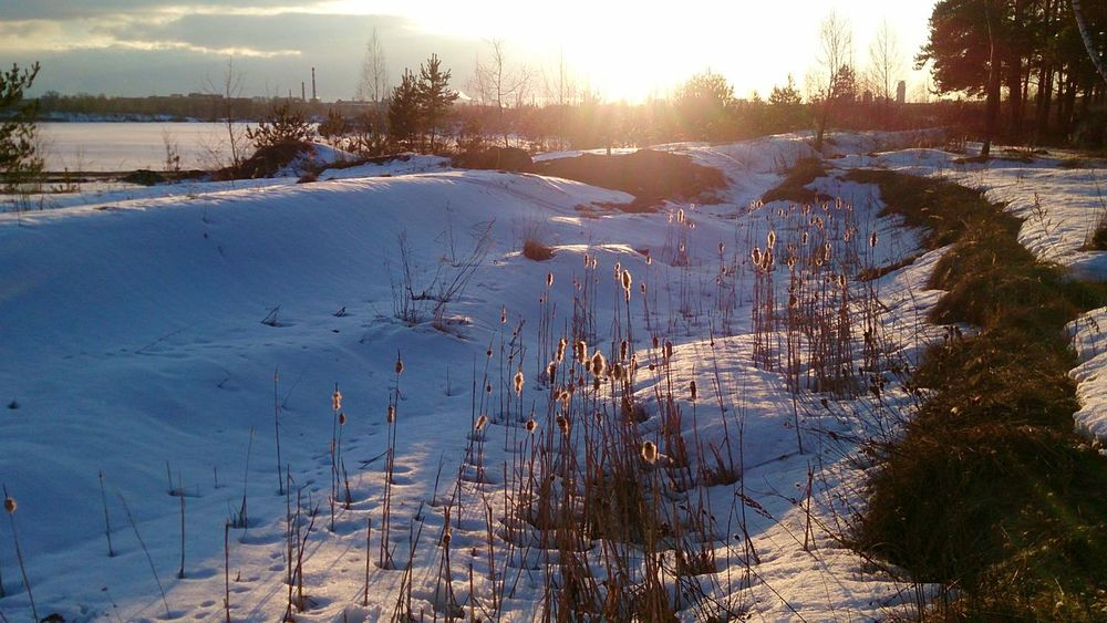 Nature Winter Snow Drygrass end of the Winter