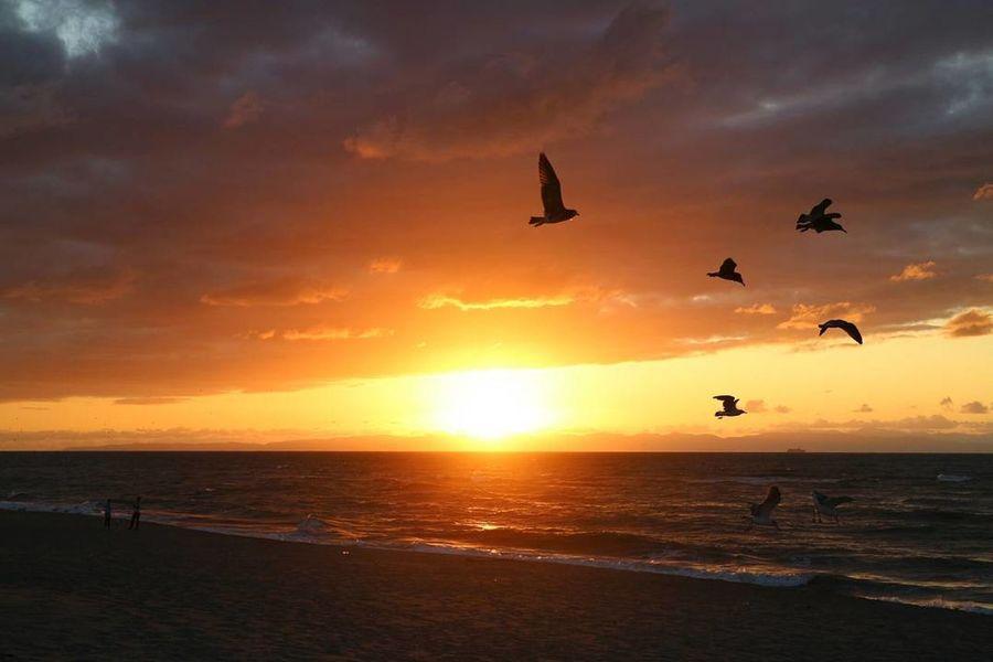 Sunset Silhouette Beach Sea Flying Nature Beauty In Nature Sun Sky Horizon Over Water Niigata-shi Japan