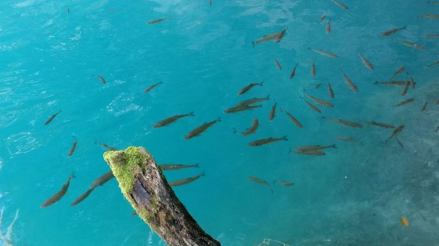 Awesome_nature_shots Croatia Fish Lake Nature Plitvice National Park Summer Water