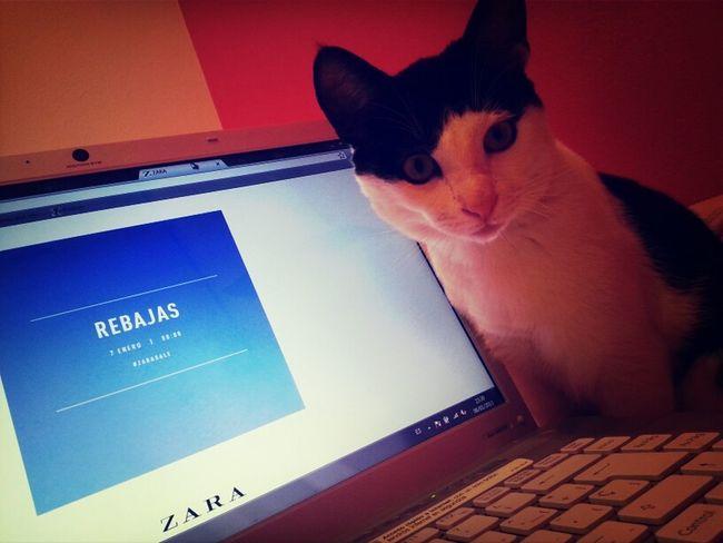 Cat Shopping Cats Rebajas Computer