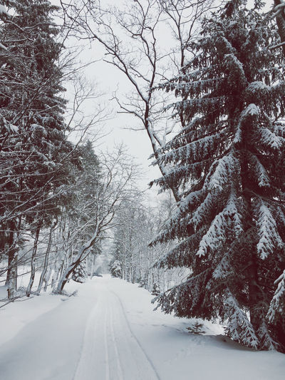 Snow covered road amidst trees during winter