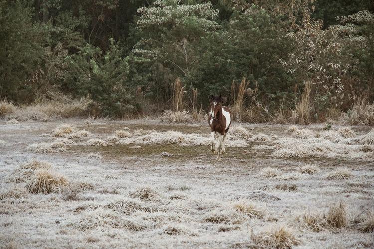Horse running on field