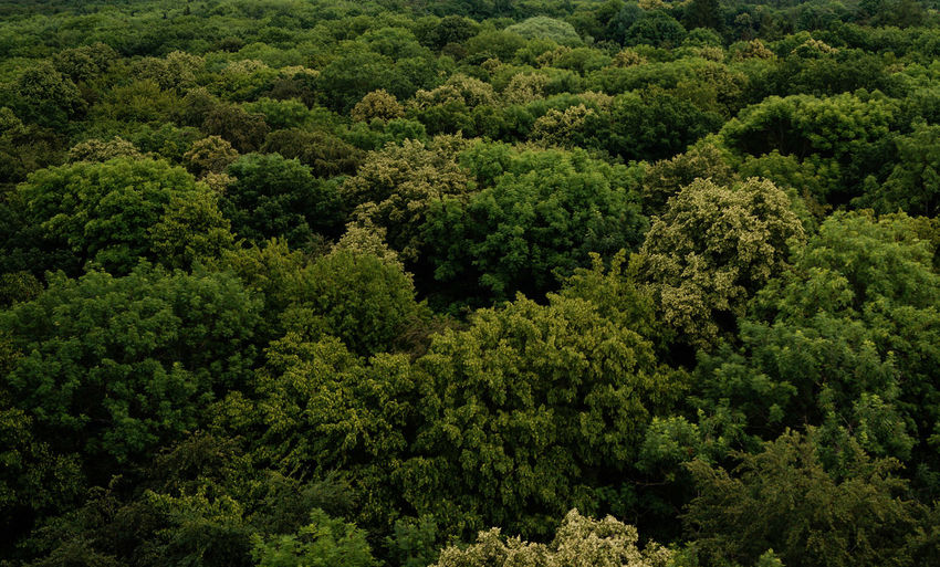 """Treetop Path at """"Heinich National Park"""" in Germany (Thuringia) Beauty In Nature Environmental Conservation Evergreen Tree Forest Green Color Landscape Lush Foliage Nature No People Tree Treetop Treetopwalk"""