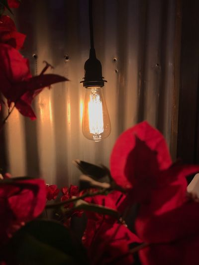 Light at night EyeEm Selects Lighting Equipment Indoors  Illuminated Red Home Interior Light Hanging Glowing Electric Light Electricity  No People Night Close-up Decoration Electric Lamp Ceiling Flower Flowering Plant Celebration Built Structure