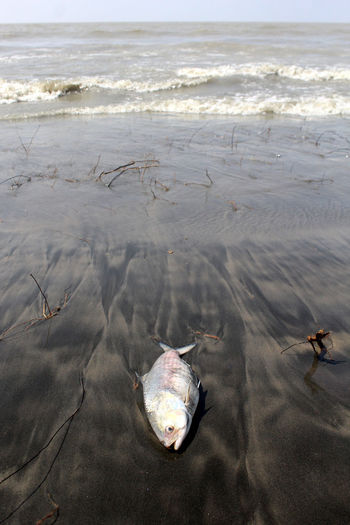 High angle view of dead fish at beach
