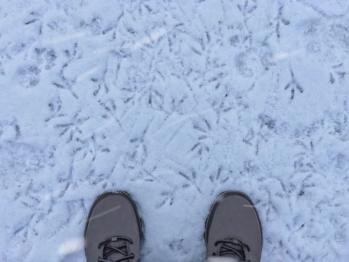 Pigeon snow marks ❄️... Pattern Boots Frozen Low Temperature Weather Environment Animal Footprints Footprints In The Snow Snowing Snowflake Pigeon Feetselfie Frost Cold Mark Shoe Low Section Human Leg Body Part Human Body Part Standing Personal Perspective Human Foot Nature Snow Winter Leisure Activity High Angle View Outdoors