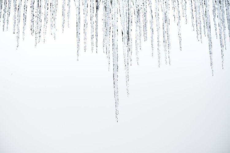 Cold Temperature Winter Snow Frozen Icicle Ice No People Environment Nature White Color Beauty In Nature Tree Tranquility Day Outdoors Plant Land Scenics - Nature Covering