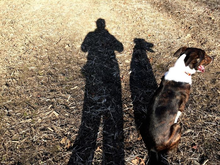 A Girl And Her Dog Shadows Shadows & Lights Shadow Light And Shadow Johnny Border Collie Bordercollie  I Love My Dog