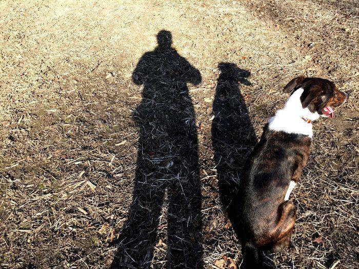 A Girl And Her Dog Shadows Shadows & Lights Shadow Light And Shadow Johnny Border Collie Bordercollie  I Love My Dog