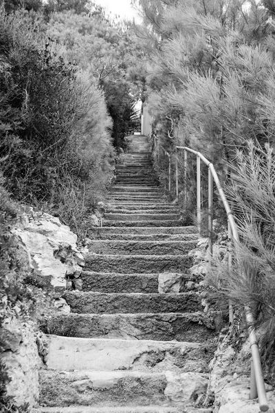 Black & White Stairway Steps Black And White Built Structure Day Diminishing Perspective Direction Footpath Growth Land Long Monochrome Narrow Nature No People Outdoors Plant Railing Staircase Steps And Staircases The Way Forward Tree