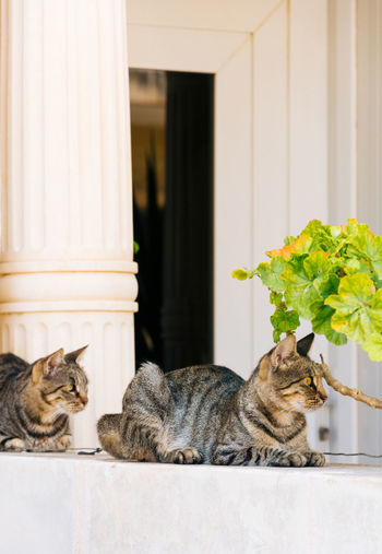 Cats Relaxing By Plant