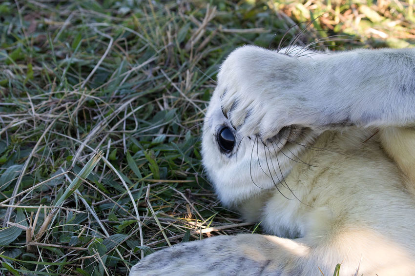Seal Pups at Dona Nook Animal Themes Animals In The Wild Baby Seal Close-up Day Grass Gray Seal Mammal Nature No People One Animal Outdoors
