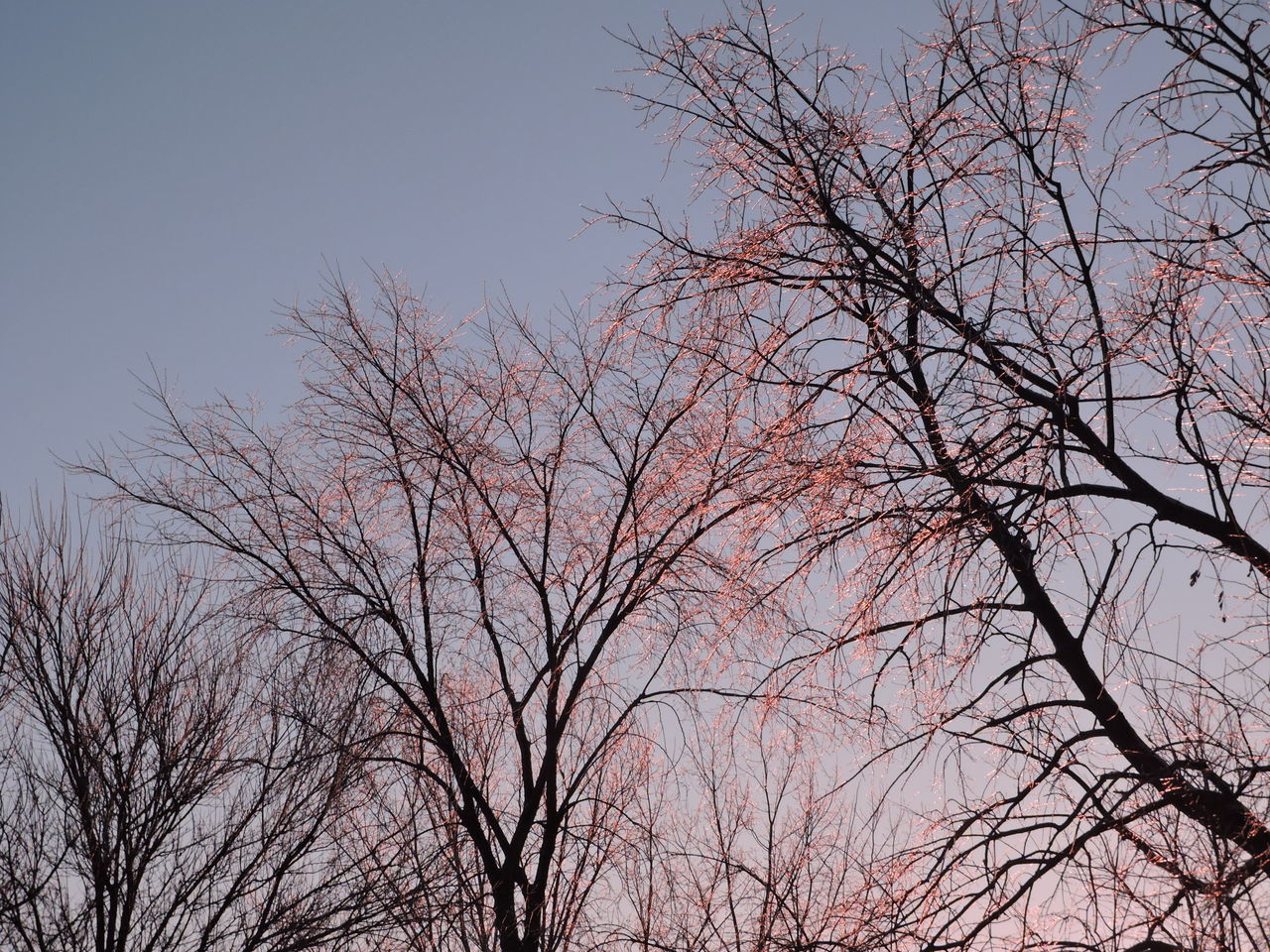 bare tree, branch, tree, low angle view, nature, no people, beauty in nature, outdoors, day, sky, bird