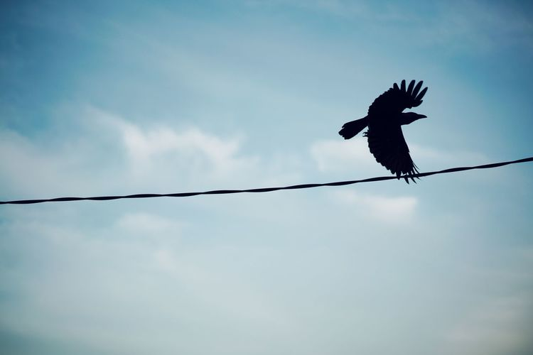 the crow Silhouette Sky EyeEm Best Shots EyeEmNewHere Bird Flying City Silhouette Bird Of Prey Child Spread Wings Full Length Sky Raven - Bird Crow