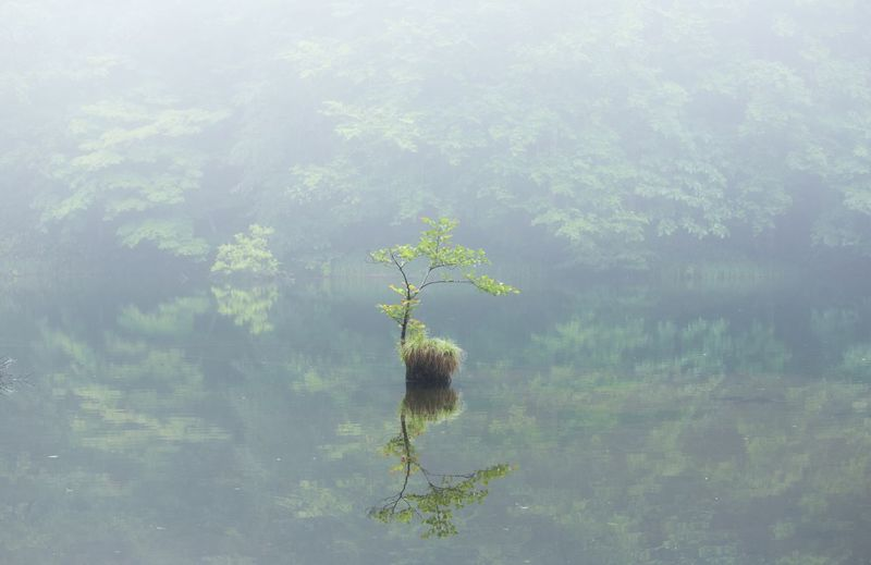 Close-up of tree in lake