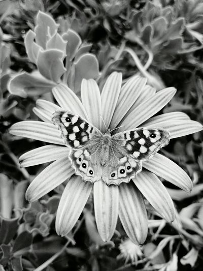 Flowers Blackandwhite Hello World Betterfly Nature Good Morning