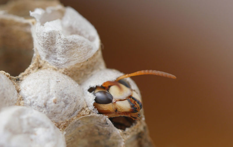 A wasp is born