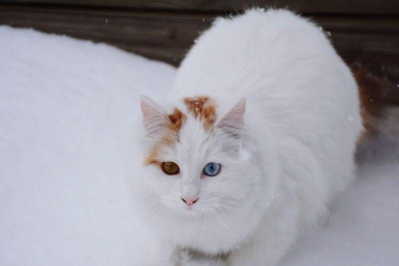 Nikon Snow