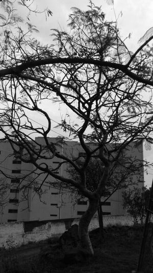 PhonePhotography Traveling Original Photography Stretview Cuernavaca Trees Collection Nature Photography Contrast