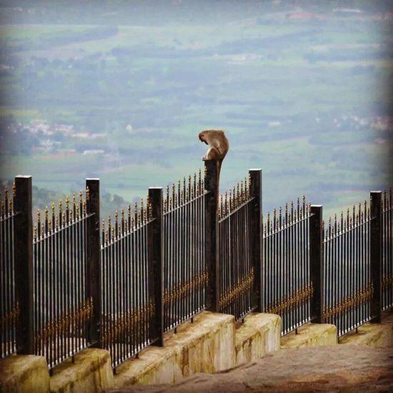 Monkey Nikon Nandi Hills