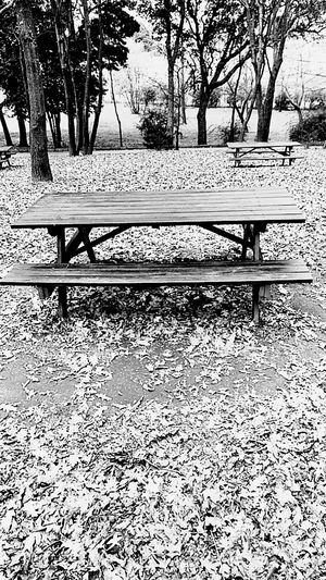 Park - Man Made Space Bench Sunlight Tree Blackandwhite Black And White Collection  Tables And Chairs Myway Forest Road Close-up Nofilters Nofiltersrequired Myweekoffreedom Nature Forestphotography