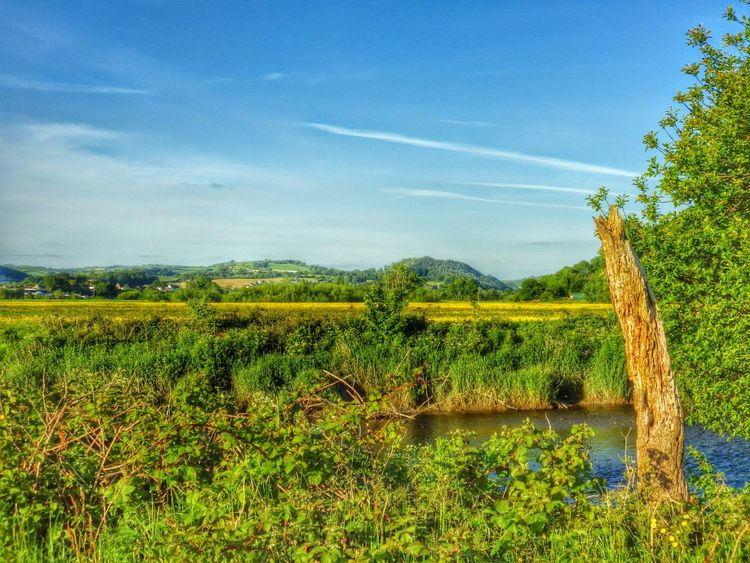 Wales Farm Outdoors Countryside Landscape Green Photography Taking Photos Check This Out Deadwood