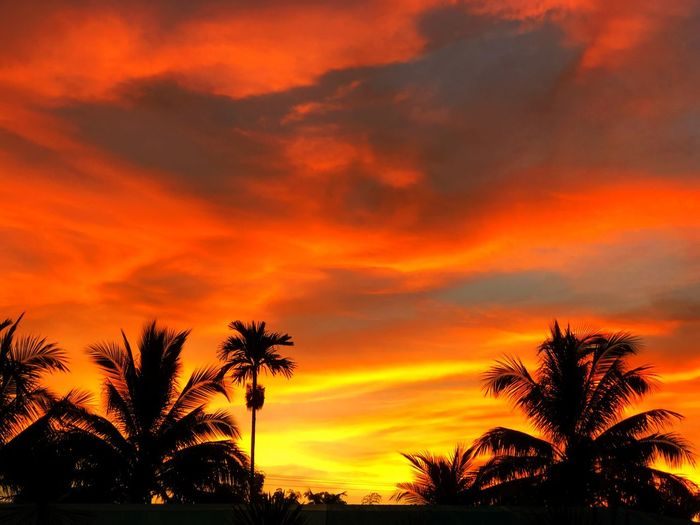 Beautiful sunset Sunlight Sunrise Sunshine Beautiful Tree Sunset Sky Orange Color Beauty In Nature Plant Cloud - Sky Scenics - Nature Tranquility Palm Tree Tranquil Scene Idyllic Nature Dramatic Sky
