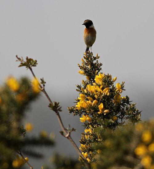 Bird perching on a flower