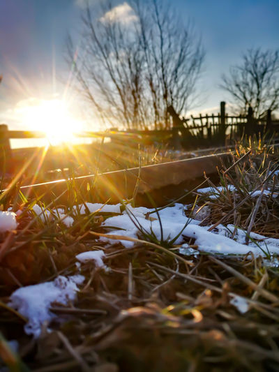 Close-up of snow covered field against bright sun