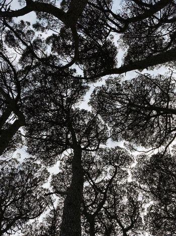 Perspectives On Nature Perspectives On Nature