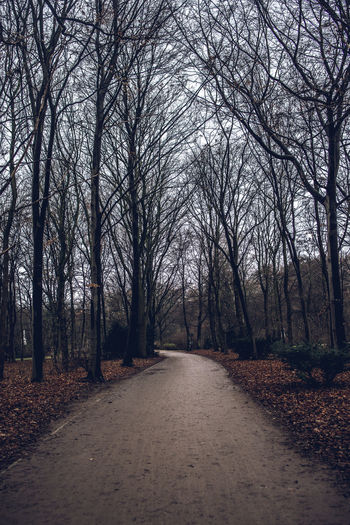 Road amidst bare trees in forest during autumn