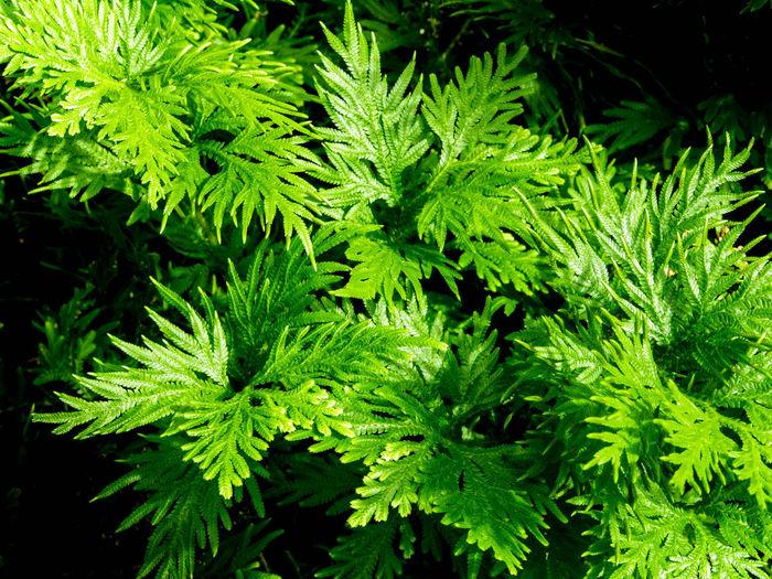 Freshness green
