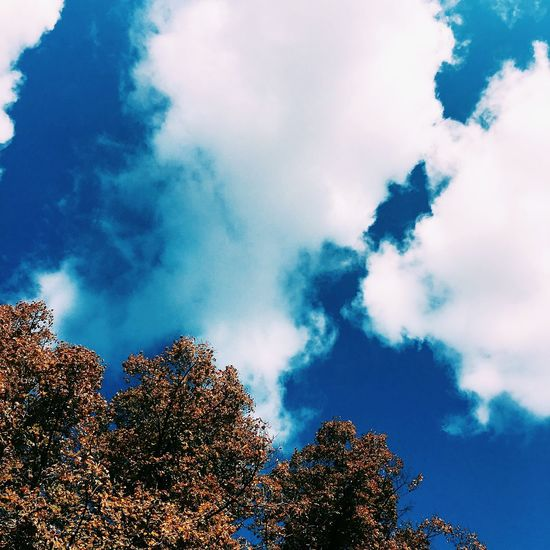 Low Angle View Tree Sky Growth Branch Cloud Scenics Blue Nature Tranquil Scene Beauty In Nature High Section Cloud - Sky Tranquility Day Outdoors Cloudy Tree Top Treetop Outline Landscape Landscapephotography Canonphotographers Cloudy Sky Only
