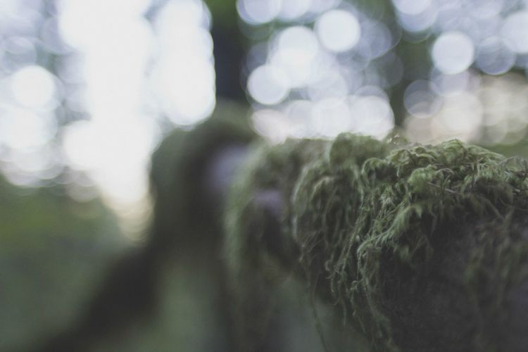 Moss details (3) Beauty In Nature Bokeh Branch Close-up Conceptual Extreme Close Up Extreme Close-up Focus On Foreground Forest Green Green Growth Lens Flare Lichen Life Magic Moss Nature No People Non-urban Scene Outdoors Selective Focus Tranquility Trees Wildlife & Nature