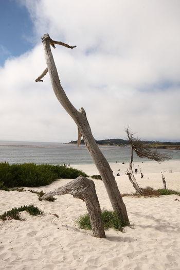 EyeEmNewHere EyeEm Gallery Eye Em Travel Water Beach Sea Carmel California