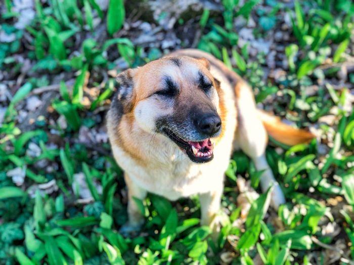 One Animal Animal Themes Animal Dog Canine Mammal Pets