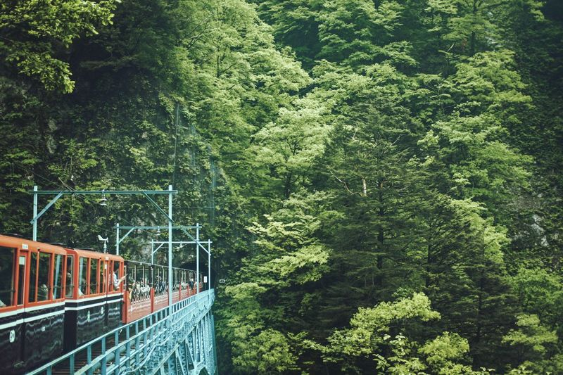Kurobe,Japan Train EyeEm Best Shots EyeEmNewHere EyeEm Nature Lover EyeEm Selects EyeEm Gallery Japan Nature Vacations Journey Trip Mountain Beauty In Nature Tree Court Railing High Angle View A New Perspective On Life It's About The Journey My Best Photo