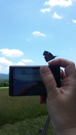 Low angle view of cropped landscape against sky
