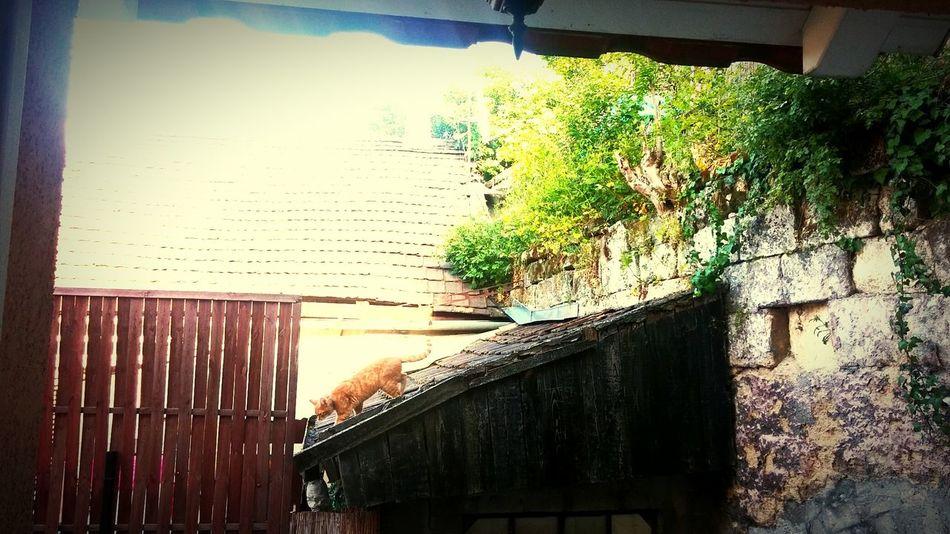 Cat Cats Cat♡ Catsagram House Houses Housecat Housecats
