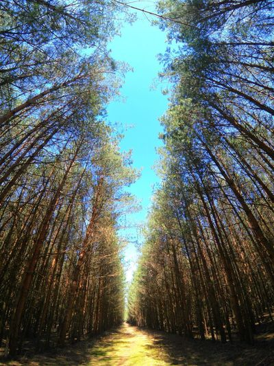 Goprooftheday Gopro Tree Plant Growth Sky Beauty In Nature Nature Tranquility No People Sunlight Land Tranquil Scene Day Scenics - Nature Low Angle View Forest Outdoors Idyllic Blue Non-urban Scene Environment