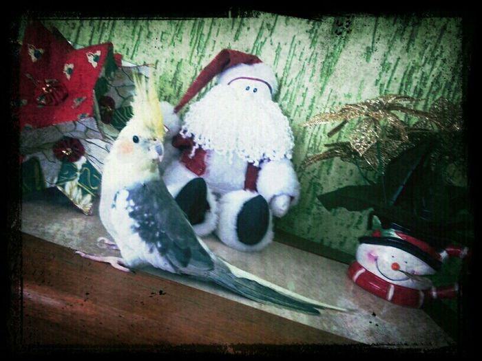 Ninna, a mascote da casa, pedindo ao Papai Noel dois pacotes de semente de girassol! rsrs...