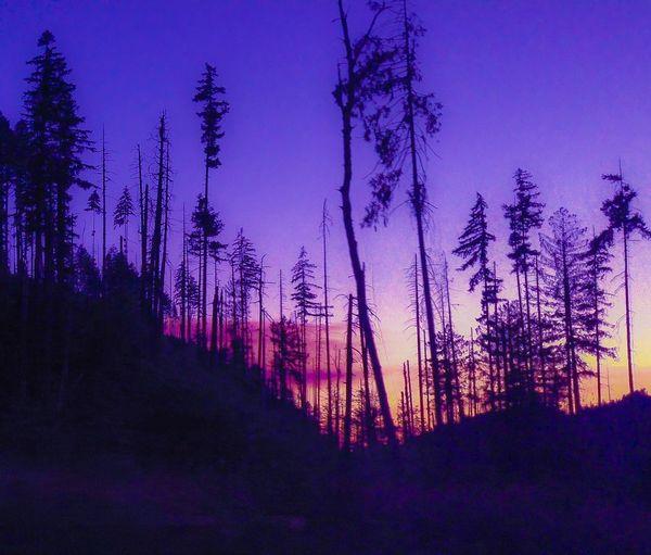 Oregon Sunset Sunset Sunset Silhouettes Oregon