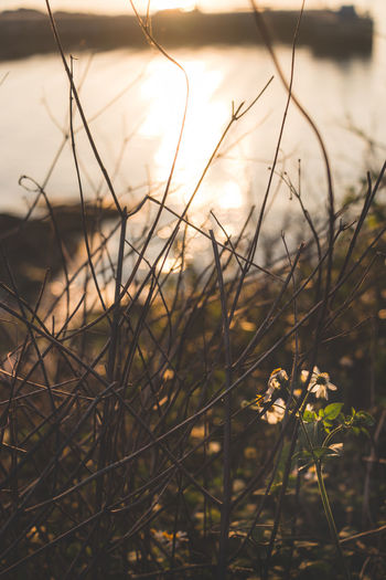 Beauty In Nature Bokeh Chill Close-up Contrast Day Field Focus On Foreground Freshness Grass Growth Illuminated Nature No People Outdoors Plant Reflection Relax Scenics Sky Sunset Tranquil Scene Tranquility Water Wild